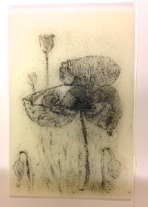poppy in kiln
