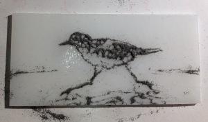 SC6 sanderling
