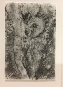 SC8 owl
